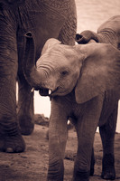 wightphotography-safari-sales-prints-7