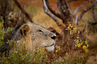 wightphotography-safari-sales-prints-20