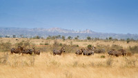 wightphotography-safari-sales-prints-3