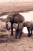 wightphotography-safari-sales-prints-8